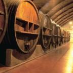 Ruta del Vino. Denominación de Origen Ribera del Guadiana