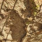 Grabados y Pinturas Rupestres en Los Barruecos  (Malpartida de Cáceres)