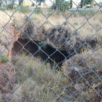 Cueva del Conejar (Cáceres)